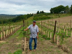 Eastern NY Grape Industry Growth Prompts Marketing Initiatives,Specialist Hiring