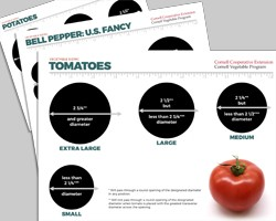 Growing for Wholesale: Vegetable Grading Templates