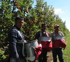 Agricultural Labor Survey!