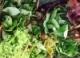 2017 Lettuce Variety Trial