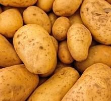 2017 Potato Variety Trial