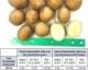 Potato Variety Trial, 2017