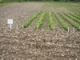 2015 Herbicides for Weed Control in Snap and Dry Beans