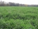 Cover Crops for Vegetable Growers Website