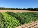 Recording of Fitting  Cover Crops in Vegetable Systems Webinar Nov 8, 2018