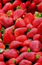 Understanding Strawberry Root Problems That Impact Berry Farm Profitability