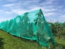Hail Netting: Is It Right for Your Farm?