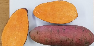 2019 Sweet Potato Variety, Slip Production, Slip Size Trials