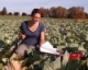 Understanding Nitrogen Use in Cabbage: New York Study, 2014-2016