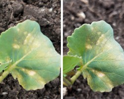 How to Take a Photo for Crop Diagnostics