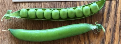 2020 Pea Variety Trial Report
