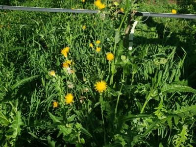 Herbicide Lookup by Active Ingredient