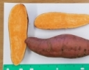 2020 Sweet Potato Variety Trial Results