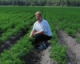 Managing Weeds in Carrot Fields