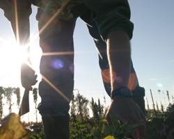 Collaborative Marketing for Small Farms